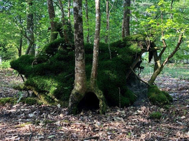 parc hobbit